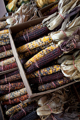 Locally grown corn for sale at a wholesale market in Amish country, Lancaster, Pennsylvania