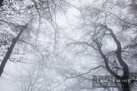 Beech forest in fog (lat. fagus sylvatica) - Europe, Switzerland, Zürich, Zuerichsee, Sihlwald - digital