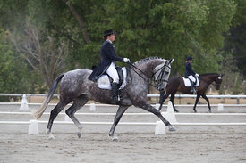 SI_Festival_of_Dressage_300115_Level_6_NCF_0163