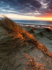 Flaming Grasses Formby