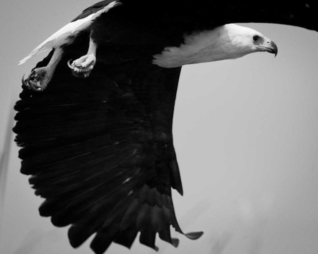 5321-Bird_Laurent_Baheux