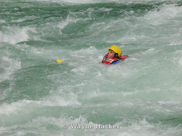 Rafter fights to stay above the raging rapids after falling out of the raft while rafting of the South Fork of the Skykomish River.