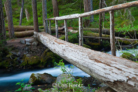 Log Footbridge over Royal Creek in Olympic Ntional Park