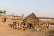 Hamer homestead, Turmi, South Omo Valley, Ethiopia