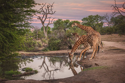 south_africa-458