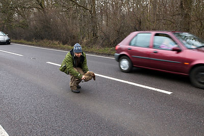 "UK - Kent - Fergus Drennan known as 'Fergus the Forgager"" collects a pheasant on the road, killed by a car at Bishopstone near Herne Bay"