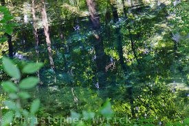 Stunning and magical image of Blue Hole Spring which is perfect for large prints.  Red Clay State Historical Park of Tennessee is the home of a spring sacred to the Cherokee people as it was the last location of Cherokee national government before the Indian Removal Act of 1830.  The Blue Hole spring is the location where the Cherokee reportedly buried their gold when the white man drove them out of their homeland.