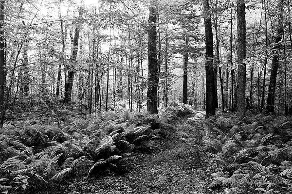 FERNWOOD TRAIL ROCK ISLAND STATE PARK DOOR COUNTY WI BLACK AND WHITE