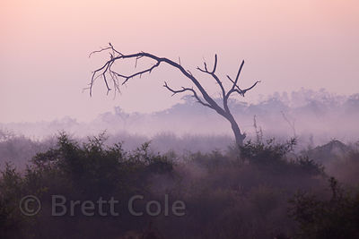 Misty pre-dawn scene in Keoladeo National Park, Bharatpur, India