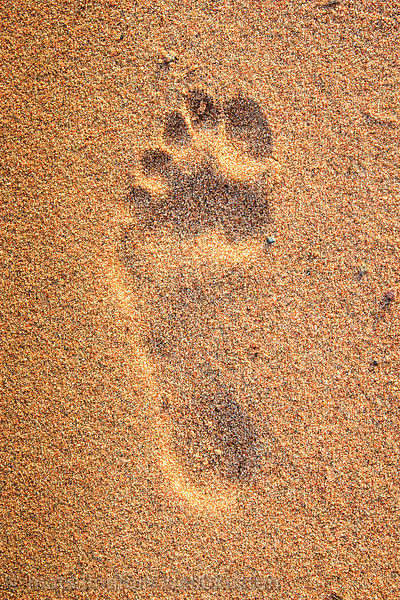 fotavtryck i sand/ footprint in sand