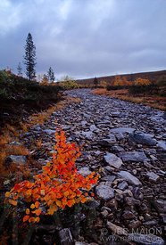 Colorful bush in a dry river bed