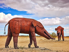 Gomphothere (Pachyderm)