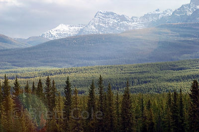 Forested wilderness and peaks in Banff NP, Canadian Rockies.