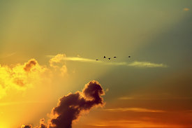 Birds and Clouds at Sunrise
