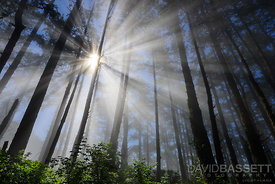 God Beams | Marin County, CA