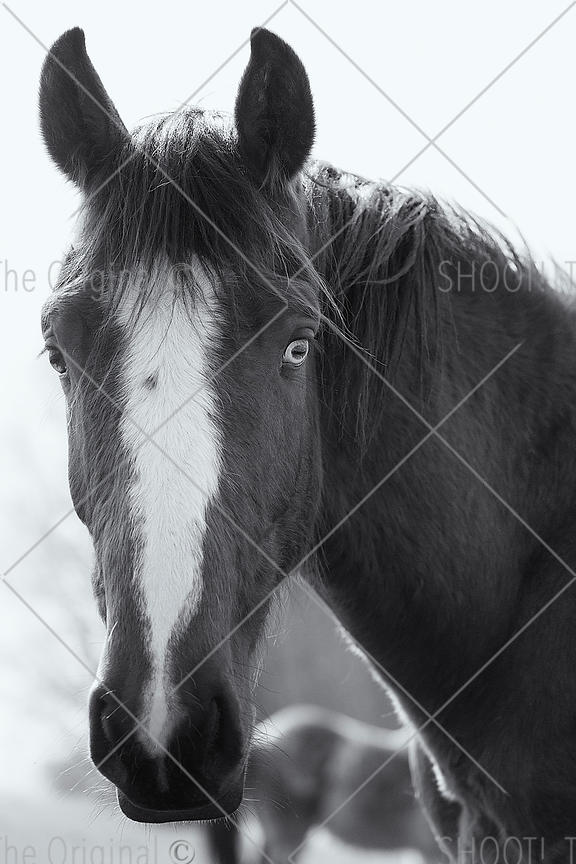 Horse with 2 different eyes