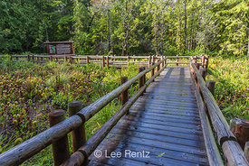 Boardwalk among Cobra-lily Plants at Oregon's Darlingtonia Wayside