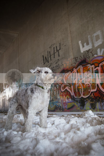 windblown dog standing in urban graffiti train tunnel
