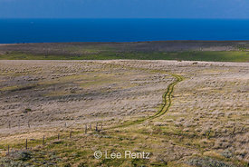 Old Two-track Road on Santa Cruz Island