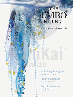 EMBO JOURNAL - 2014 photos