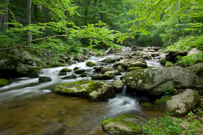 010-Blue_Ridge_D126008_Forest_Stream_001_Preview