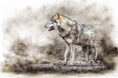 Art-Digital-Alain-Thimmesch-Loup-28