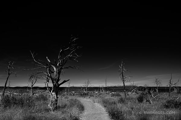 WETHERHILL MESA MESA VERDE NATIONAL PARK COLORADO BLACK AND WHITE