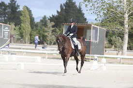 SI_Festival_of_Dressage_310115_Level_4_Champ_0581