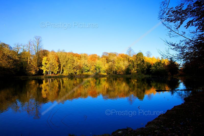 Autumn Trees Line the edge of Lake with Strong Reflections in the Water