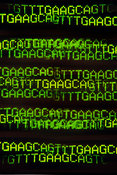 DNA base sequence