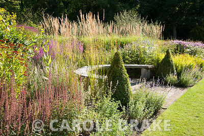 Curved wooden seat backed by grasses and flowering perennials including Lythrum virgatum 'Dropmore Puprle' along the main border, with clipped box cone in the foreground and dark purple Salvia nemerosa 'Caradonna'. RHS Garden Harlow Carr, Harrogate, North Yorkshire, UK