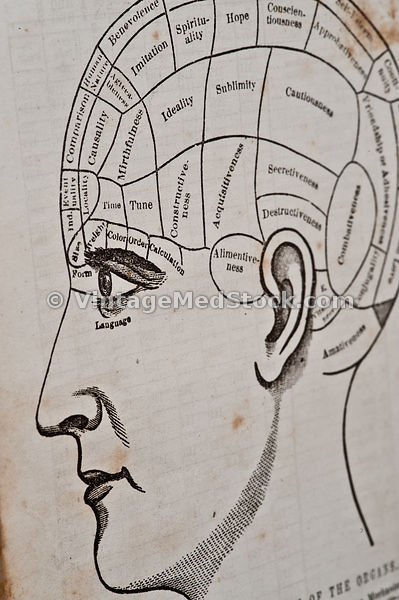 phrenology, head bumps, phrenologist, head