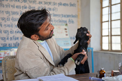 Dr. Vasudev Garg examines a baby goat at the animal hospital in Jaisalmer, India