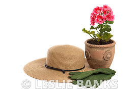 Potted Plants images