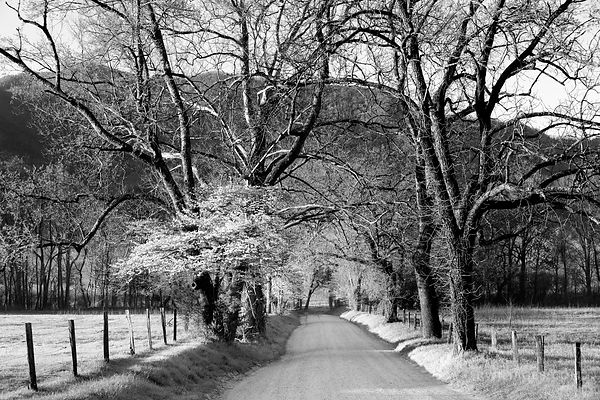SPARKS LANE CADES COVE SMOKY MOUNTAINS BLACK AND WHITE