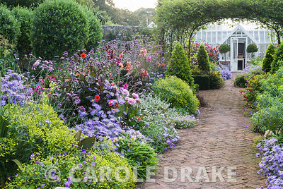 Central brick path in the walled garden is framed by asters, dahlias, euphorbia, Verbena bonariensis and clipped bay pyramids. Alitex greenhouse is seen framed by a central rose arch clothed with Rosa banksiae. Haddon Lake House, St Lawrence, Isle of Wight, UK
