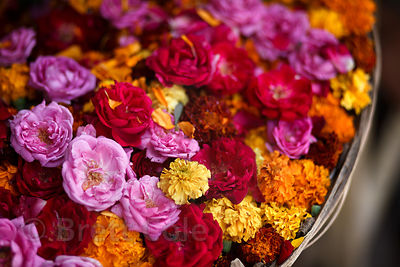 Flowers for sale outside the Brahma temple in Pushkar, Rajasthan, India