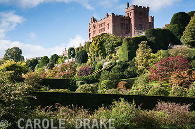 Powis Castle towering above a spectacular sequence of Baroque terraces including vast clipped yews in autumn