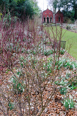 The Red House, seen beyond beds filled with snowdrops below colourful stems of cornus. Painswick Rococo Garden, Painswick, Glos, UK