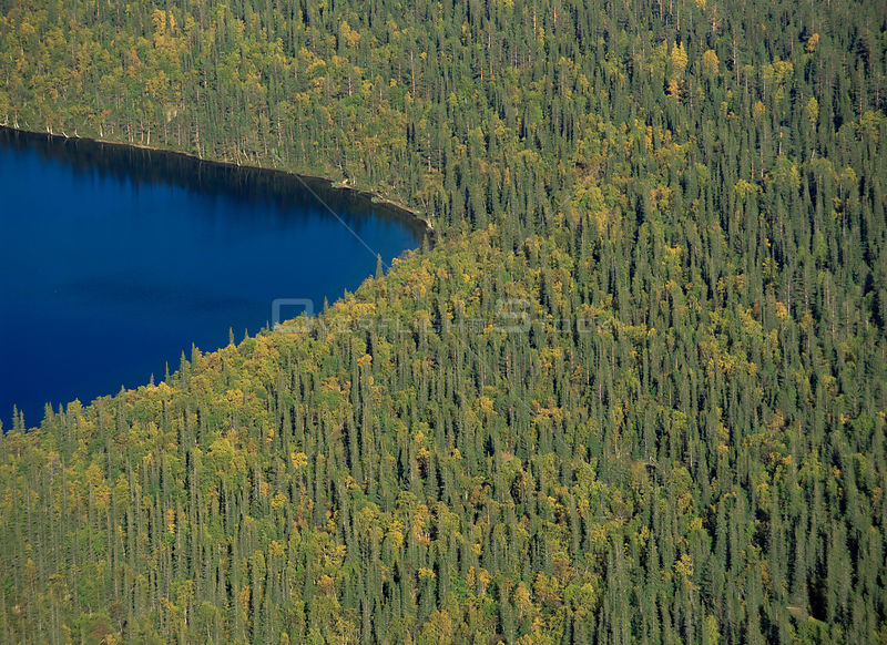 Aerial view of Sarvijarvi lake and surrounding taiga forest, Pallas-Ounastunturi NP, Lapland, Finland