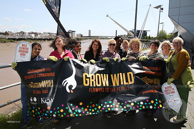 Grow Wild Wales - Riverfront Glan Afon photos