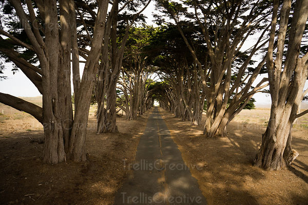Aerial photo of the cypress tree tunnel in Point Reyes National Seashore