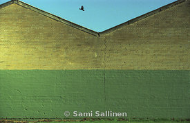 Wall and bird