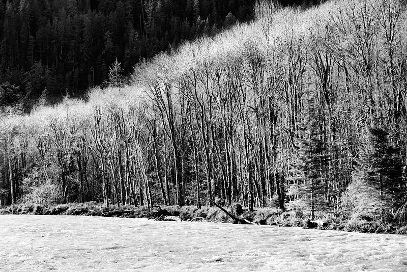 ELWHA RIVER OLYMPIC NATIONAL PARK WASHINGTON BLACK AND WHITE