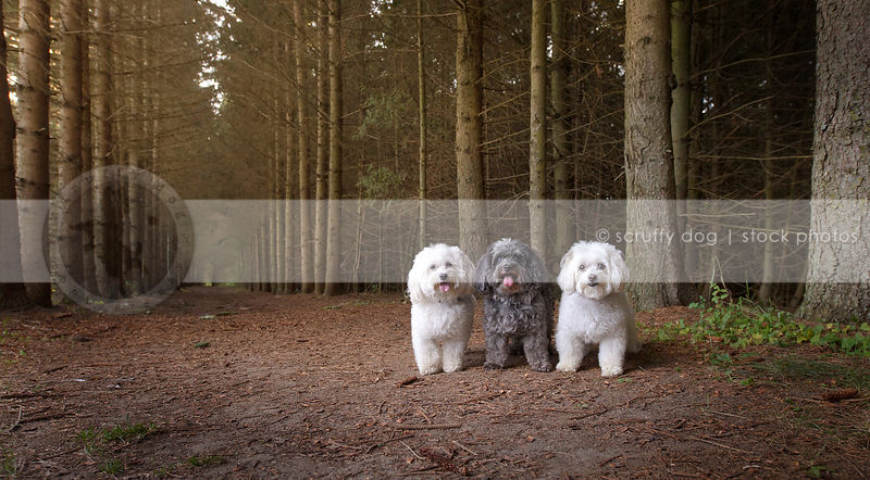three little fluffy dogs posing in tunnel of trees