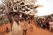 Rwandan boys carrying firewood on their heads. Rwanda