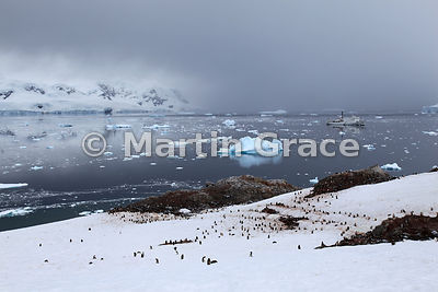 Neko Harbour, Andvord Bay, Antarctic Peninsula with Gentoo Penguin colony and polar cruise vessel Akademik Ioffe