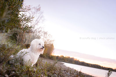small white groomed dog sitting on stony on beach