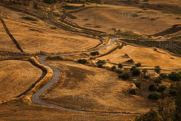 Winding road in agricultural landscape, Ronda, Spain