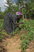 Woman preparing soil for cultivation with hoe Kenya Africa